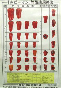 赤ピーマンの等級比較表