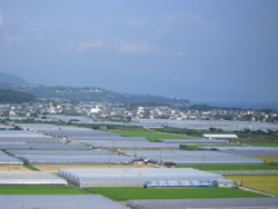 芸西村の園芸ハウス群 多くは加温用に重油が使われているが、これを木質ペレットで代替する試みが行われている