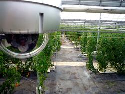 トマト栽培ハウスに設置されたネットワークカメラ