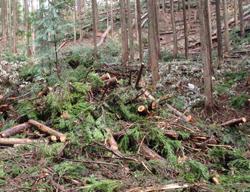 切捨て間伐が行われている森林の現状
