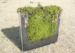 炭のタイルにも植物を植えてみました